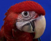 Parrot Behavior Problems | Positive Bird Training
