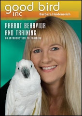 good bird parrot training video