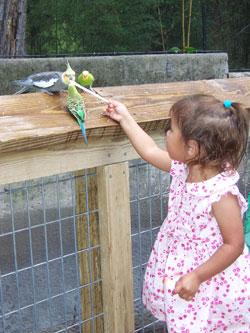Parakeet | Training