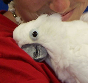 Parrot Medical Research