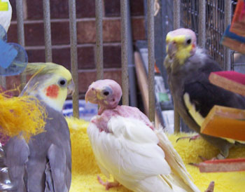 Parrot Sanctuaries