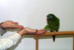 parrot training
